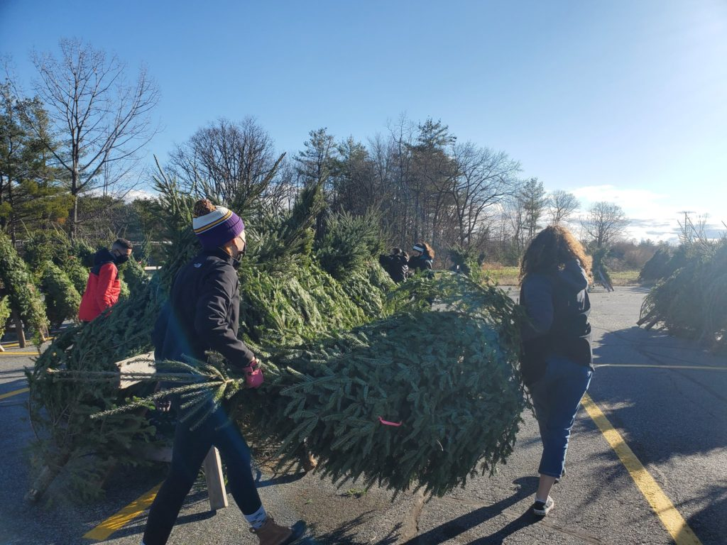students carrying christmas tree